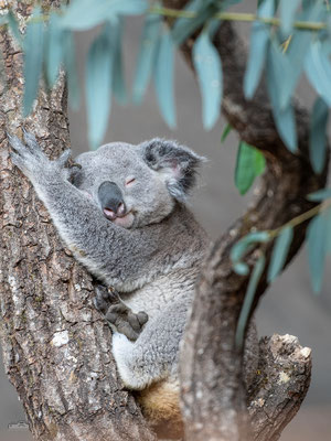 11.05.2018 - Schweiz - Züri Zoo - Masoala Halle