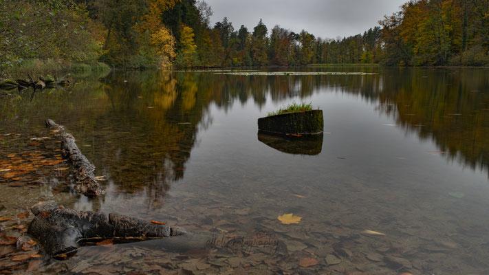 03.11.2019 - Thalwil - Waldweiher Gattikon
