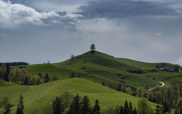 28.04.2019 - Schweiz - Hirzel - Hügel und Bäume