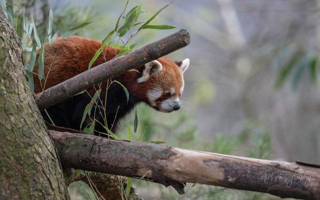 02.03.2019 - Schweiz - Zoo Zürich