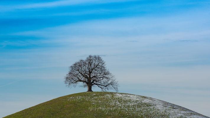 04.01.2019 - Schweiz - Meningen - Sarbach