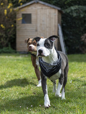 03.04.2021 - Hundeshooting mit Shania und Tyson
