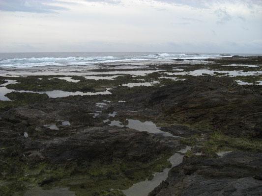 隆起サンゴの海岸です。