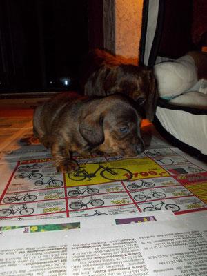 Zeitung lesen!!!