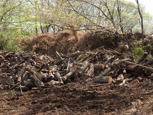 上野原遺跡の一段下の雑木林