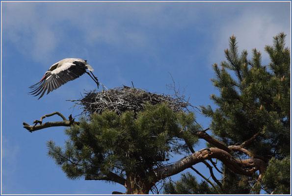 Storch am Abflug