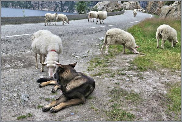Der Schafhirt ...