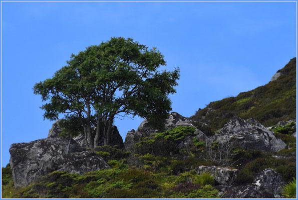 Einsamer Baum auf Runde