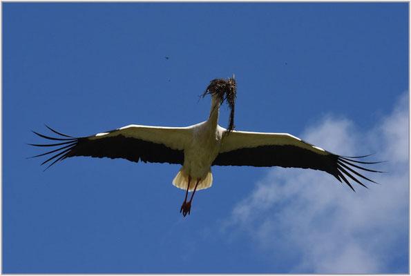 Storch mit Innenausbau