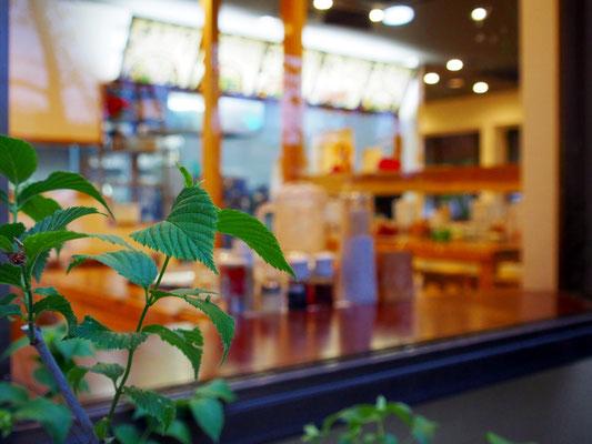 大分慶珉の植栽越しの店内