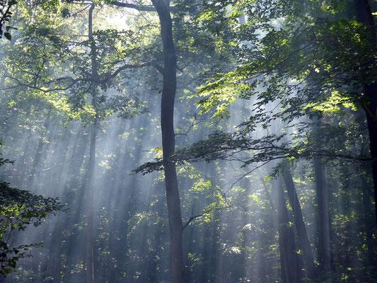 光さしこむ森