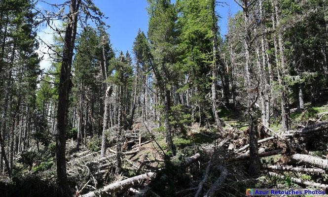 Gros dégâts dans la forêt de Saint-Jean