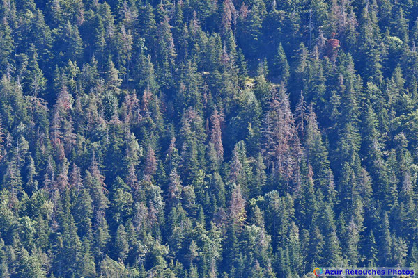 L'état de la forêt dans le versant nord du pic de l'Aigle