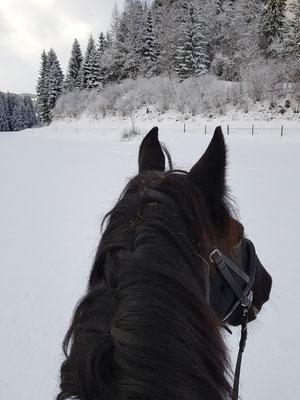 16.12.2017 Schnee Ausritt