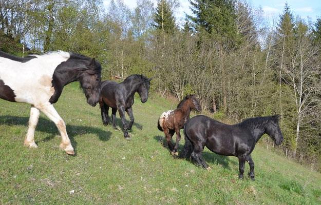 04.05.2016 Sommer in Metnitz beginnt