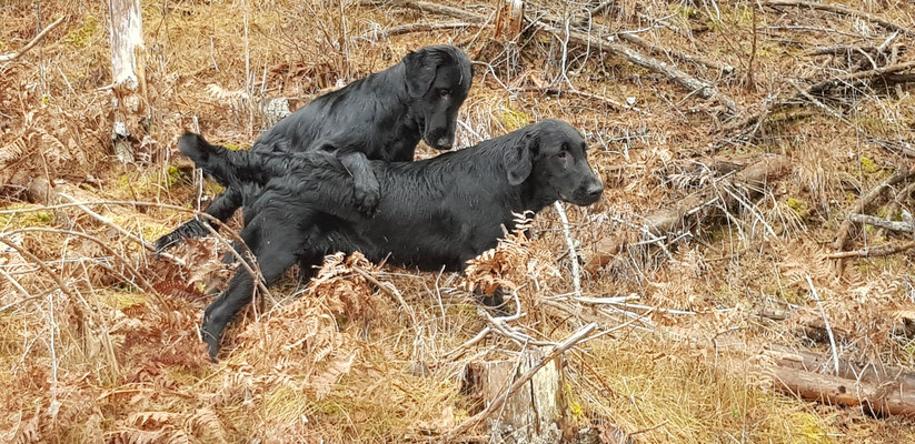 Spencer und Buddy