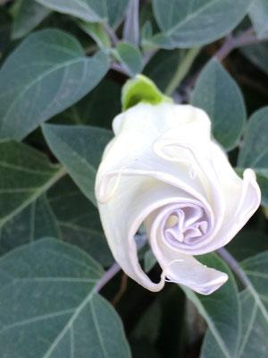 Blütenzauber in Albena