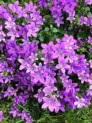 Blütenpracht im Großen Garten