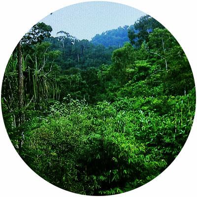 Khao Lak, Dschungel
