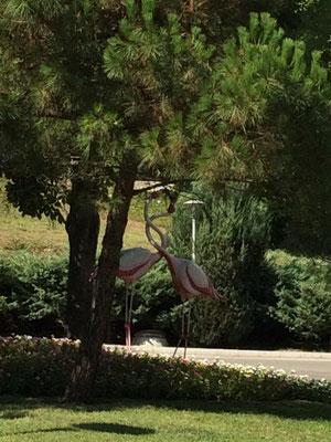 In den Grünanlagen vor dem Hotel Flamingo Grand
