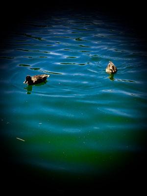 ein Paradies für Enten