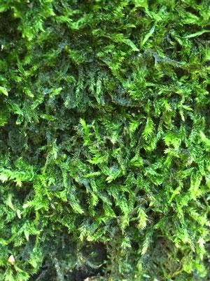Wald, Moos