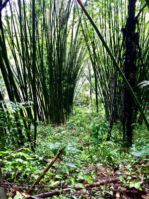 Khao-Sok-Nationalpark