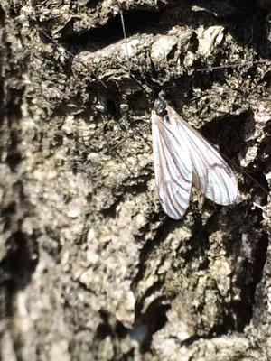 Insekten im Wald
