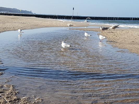 Strandeindrücke