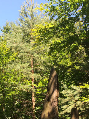 Natureindrücke, Wald