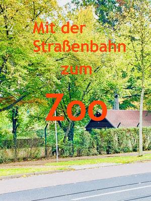 Zoo in Dresden