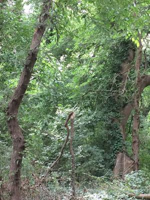 Naturschutzgebiet Baltata