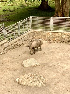 Tierpark Hirschfeld