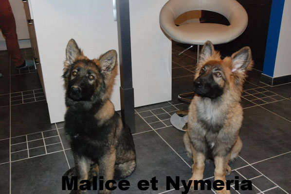 Malice et Nymëria
