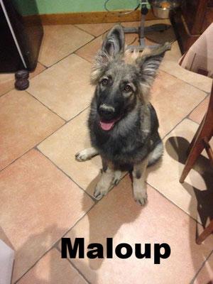 Maloup - Collier vert