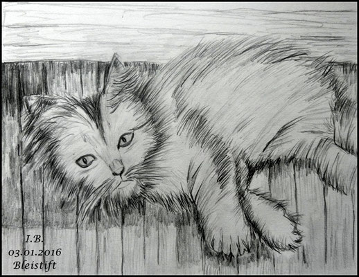 Hauptwerk Katze B