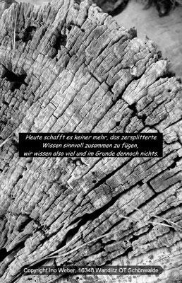 Verfallender Baumstumpf mit Zersplitterung