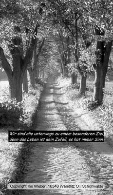 Alter Pflasterweg in der Uckermark - südlich von Boitzenburg