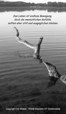 Ast im See, der sich bewegt - aufgenommen am Wolletzsee, selbst im Wasser stehend