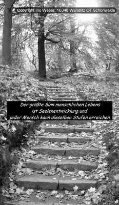 Treppe im Freien, mit Herbstlaub bestreut. - Forstbotanischer Garten in Eberswalde