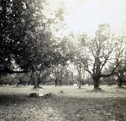 1940 : Mandla property with fruit trees. Courtesy of the Jessawala Collection.