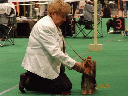 Helga Petersen mit Ihrem Yorkshire Terrier im Ring