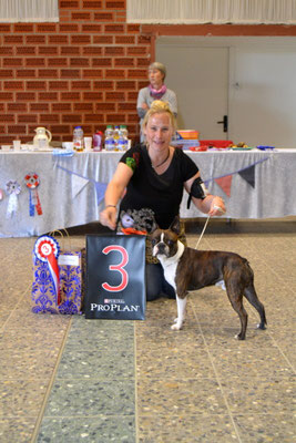 "3. Best in Show war der Boston Terrier ""Angry Peanut from Pandora´s Box"" aus Wilster"