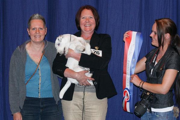 Drei stolze Besitzer des Best in Showhundes