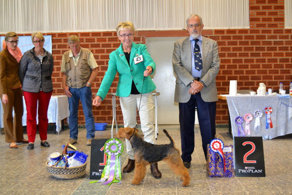 "Best in Show war der Welsh Terrier ""Danwelsh Charming Charlie"", Besitzerin Inga Hyldahl aus Dänemark"