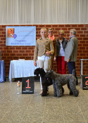 "Beste Paarklasse, Kerry Blue Terrier ""Gallant Blue Bennett + Nordic Blue Friendship Alma"", mit Lotta Heider"