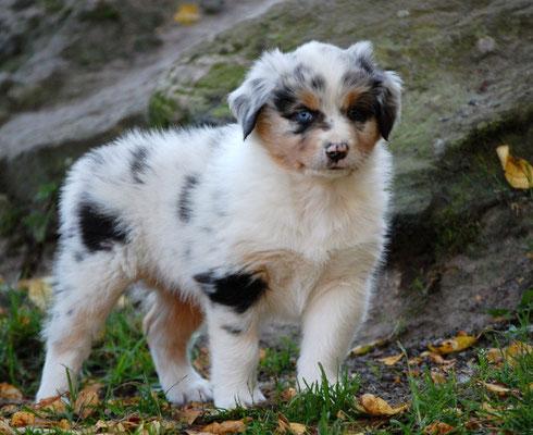 Shepherd Baby