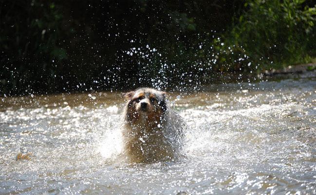 Viele Aussies haben spass im Wasser