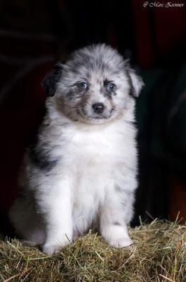 Shepherd Bunt