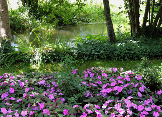 Une vue du jardin
